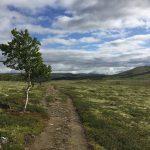 Pilgern am Olavsweg in Norwegen: Erfahrungen & Vorbereitung