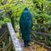 Trekking Regenmantel mit Rucksackschutz